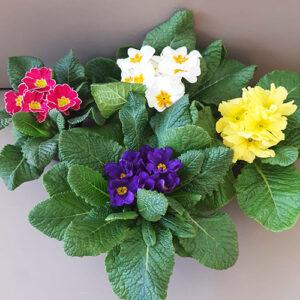 Piante fiorite stagionali